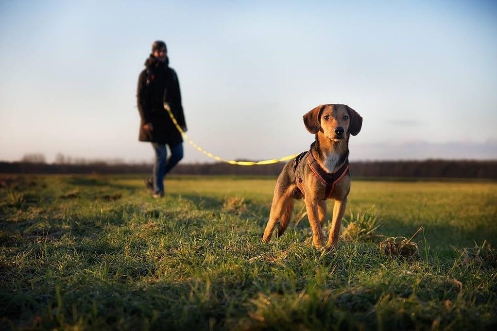 Hond met anti-ontsnappingstuig