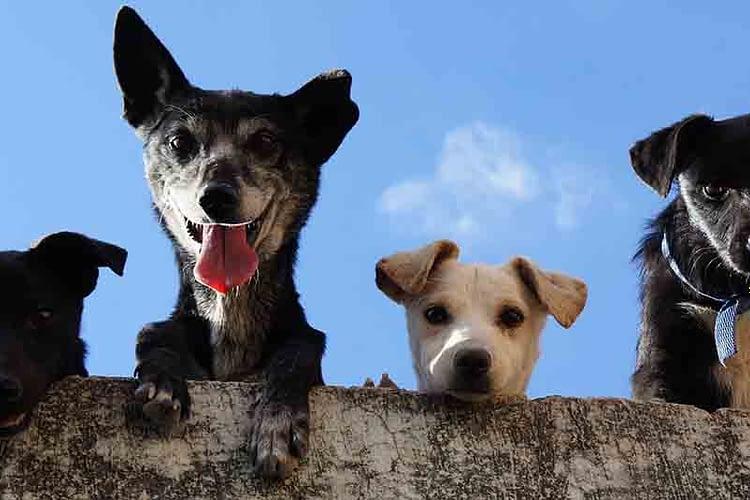 overprikkelde hond kalmeren