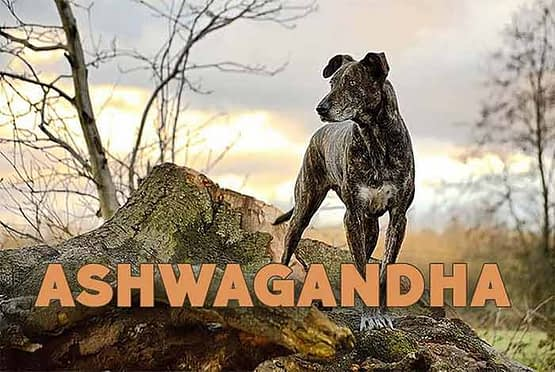Ashwagandha cbdoggy