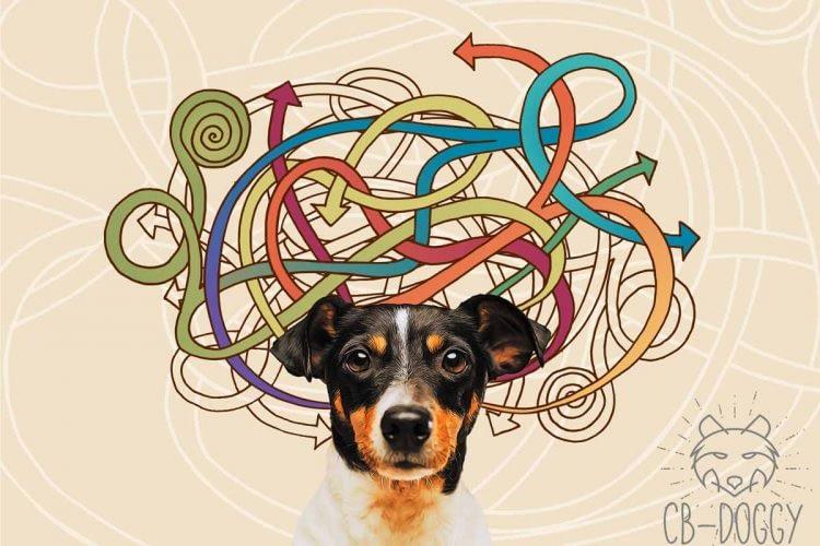 Overprikkelde hond header