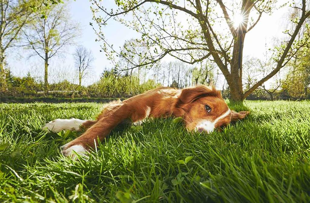 Hond in tuin zonder prikkels