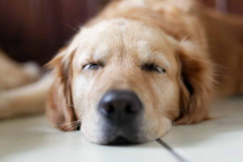 Afbeelding hond aminocalm