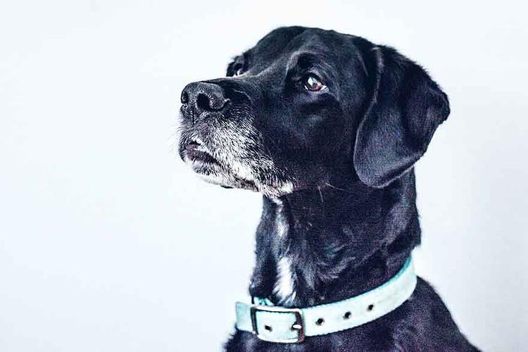 reverse sneezing hond