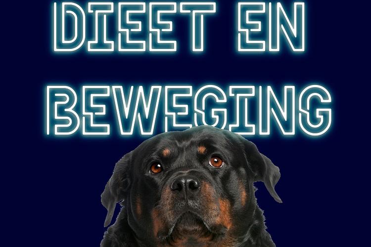 dieet hond