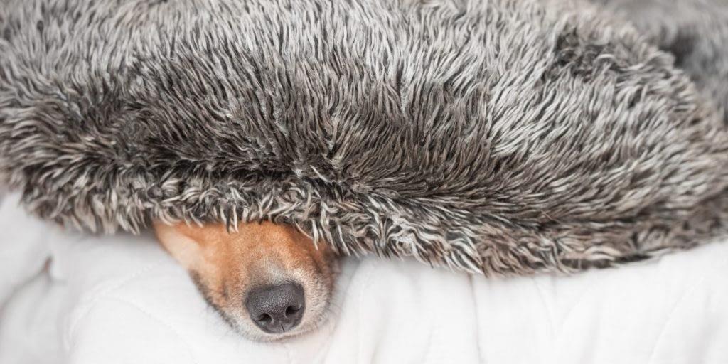 hond plotseling angstig