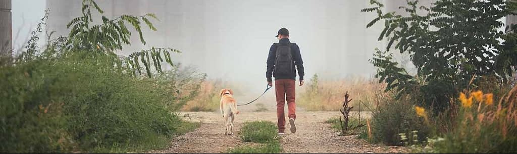 cursus buitenlandse hond
