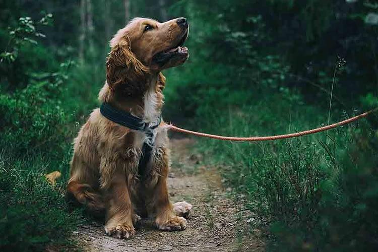 angstfase bij je hond